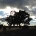 1-Nubes-en-Zamora-y-León